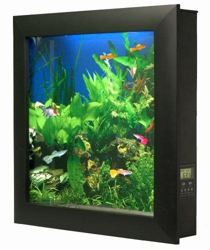 10 Gallon Tank Background Awesome Aquavista 500 Wall Mounted Aquarium with Seaweed