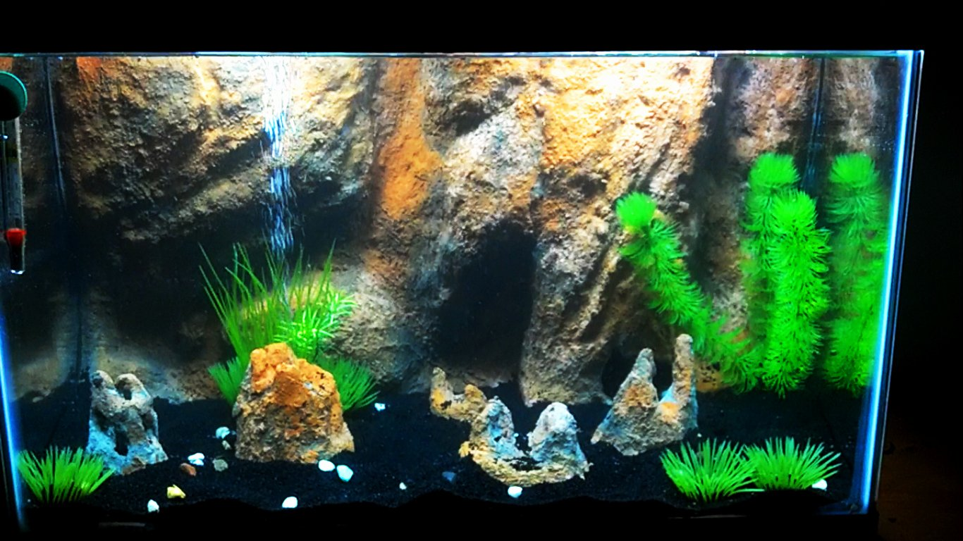 10 Gallon Tank Background Awesome Cichlids 3d Diy Background In 10 Gallon Fry Tank
