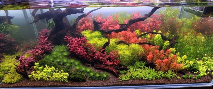 10 Gallon Tank Background Beautiful Best 10 Aquarium Backgrounds Ideas On Pinterest