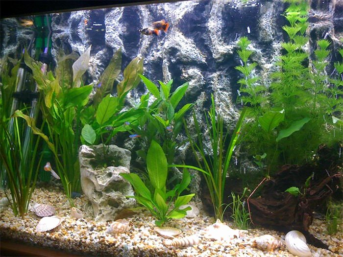 10 Gallon Tank Background Beautiful Fish Tank Backgrounds Printable 10 Gallon Aquarium