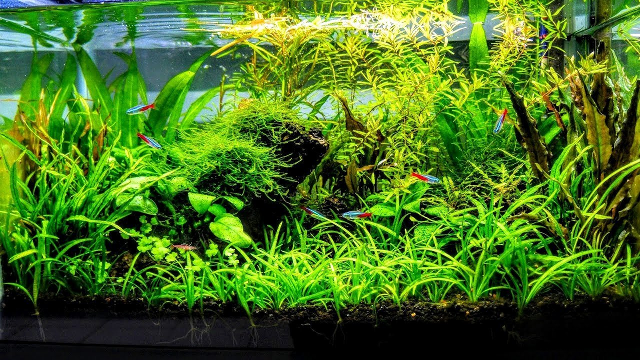 10 Gallon Tank Background Beautiful How to Aquascape A Low Tech Planted Aquarium Part 1
