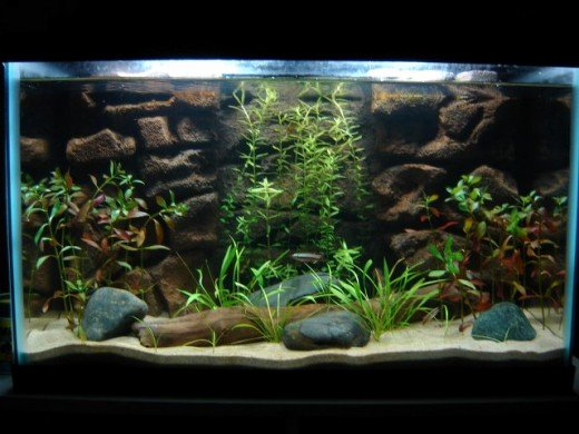 10 Gallon Tank Background Beautiful How to Make A 3d Fish Aquarium Background