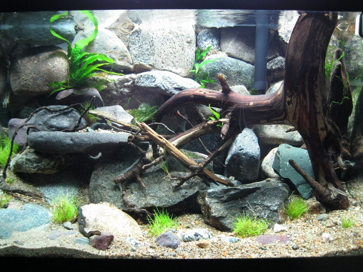 10 Gallon Tank Background Best Of Setting Up A Rock Wall Background Fish Tank