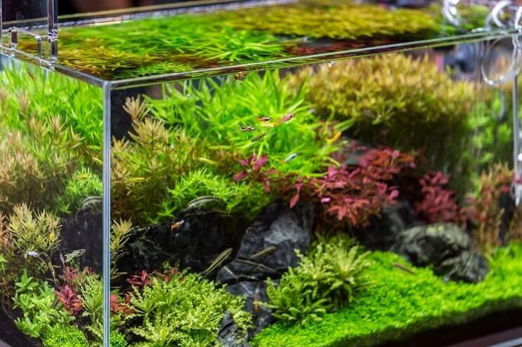 10 Gallon Tank Background Elegant 10 Gallon Fish Tank Best Fish Setup Ideas Equipment and