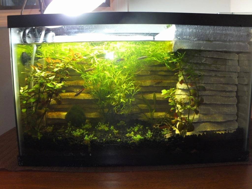 10 Gallon Tank Background Fresh 10 Gallon with Diy 3d Background and Surface Land Moss