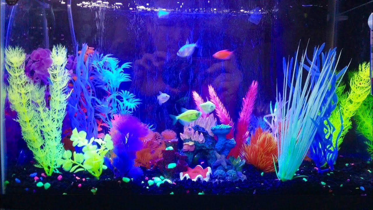10 Gallon Tank Background Lovely My Glofish Aquarium