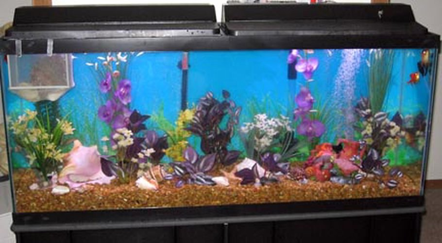 10 Gallon Tank Background Luxury Sheve S Freshwater Tanks Id 4628 Full Version