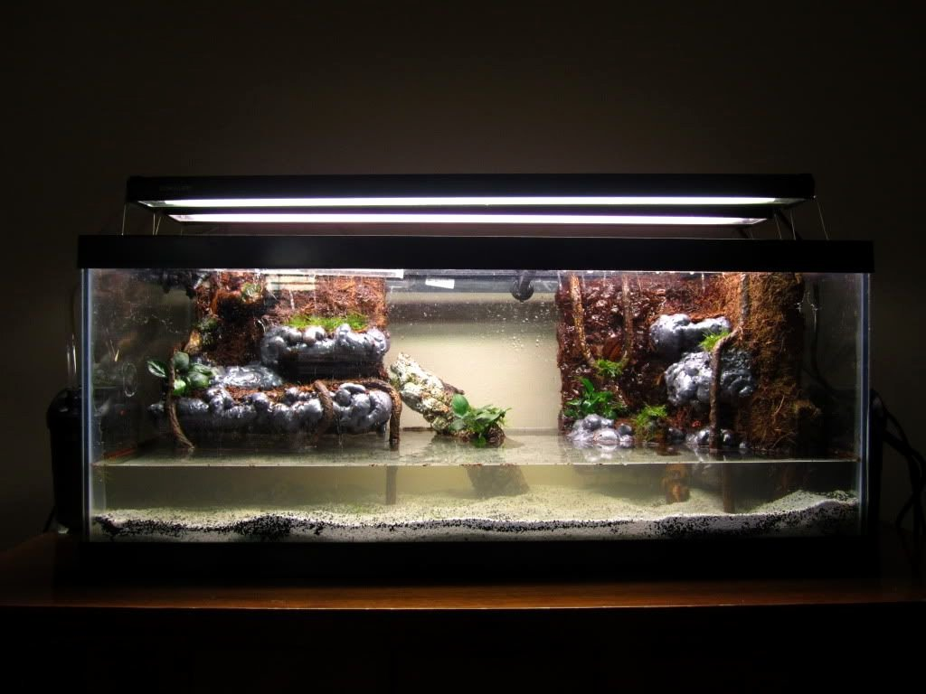 10 Gallon Tank Background New Hadoukens 20 Gallon Long Paludarium Back Into the Hobby
