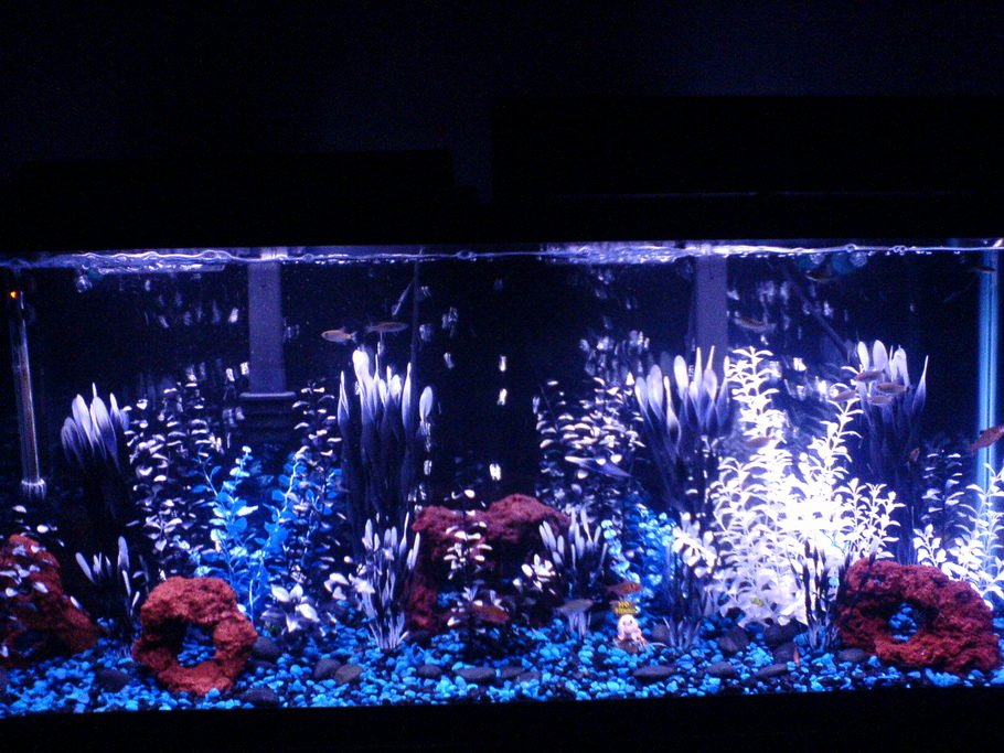 10 Gallon Tank Background New Ziggy S Freshwater Tanks Id Full Version