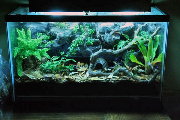 20 Gallon Aquarium Background Awesome Terrariums for Sale Local Pick Up Only Dendroboard