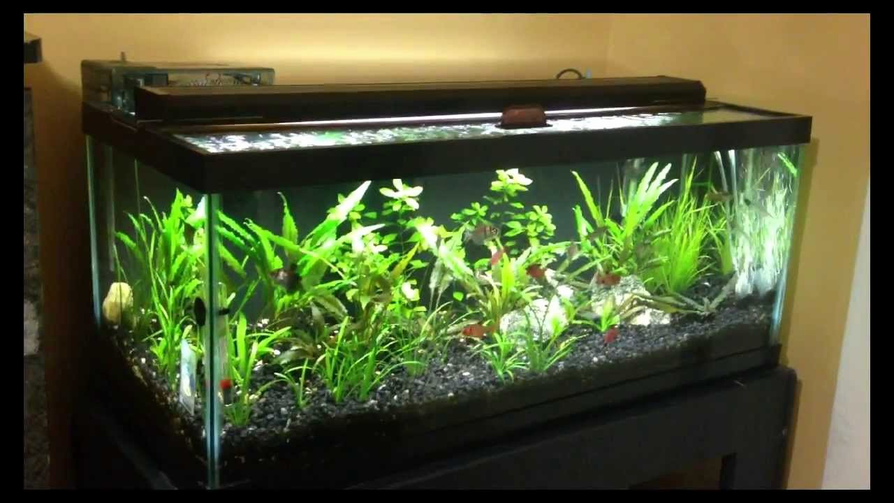 20 Gallon Aquarium Background Beautiful 20 Gallon Tank Youtube 20 Gallon Long Planted Tank
