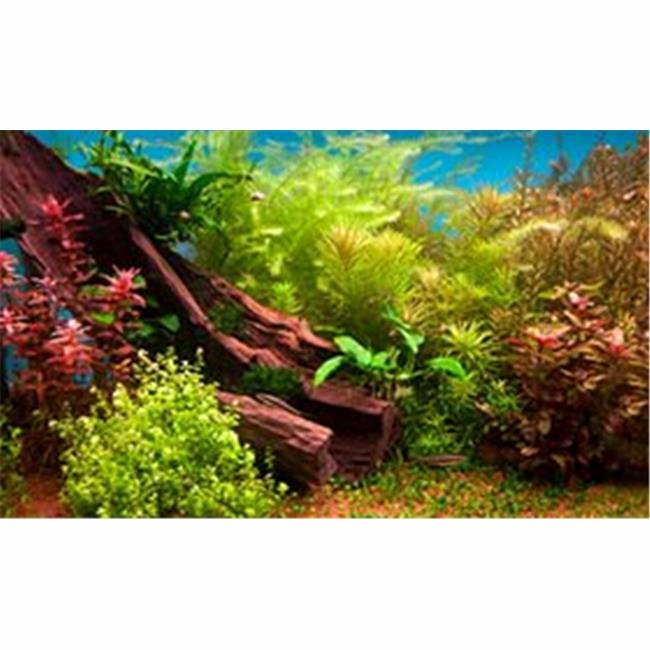 20 Gallon Aquarium Background Beautiful Fresh Water Plants 3d Depth Aquarium Background 20 Gallon