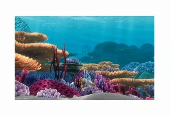 20 Gallon Aquarium Background Elegant 25 Best Ideas About Finding Nemo Fish Tank On Pinterest