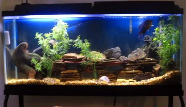 20 Gallon Aquarium Background Fresh What Should I Do with A 60 Gallon Fish Tank Quora