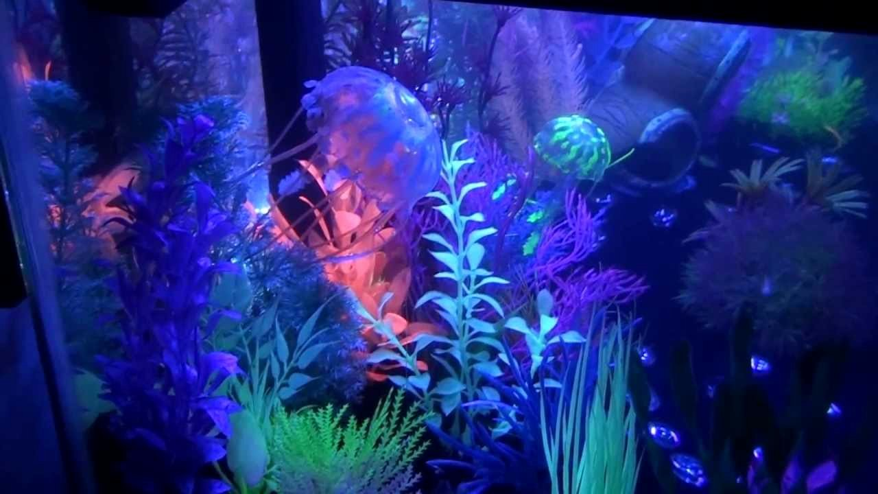 20 Gallon Aquarium Background Inspirational 20 Gallon Long Glofish Tank