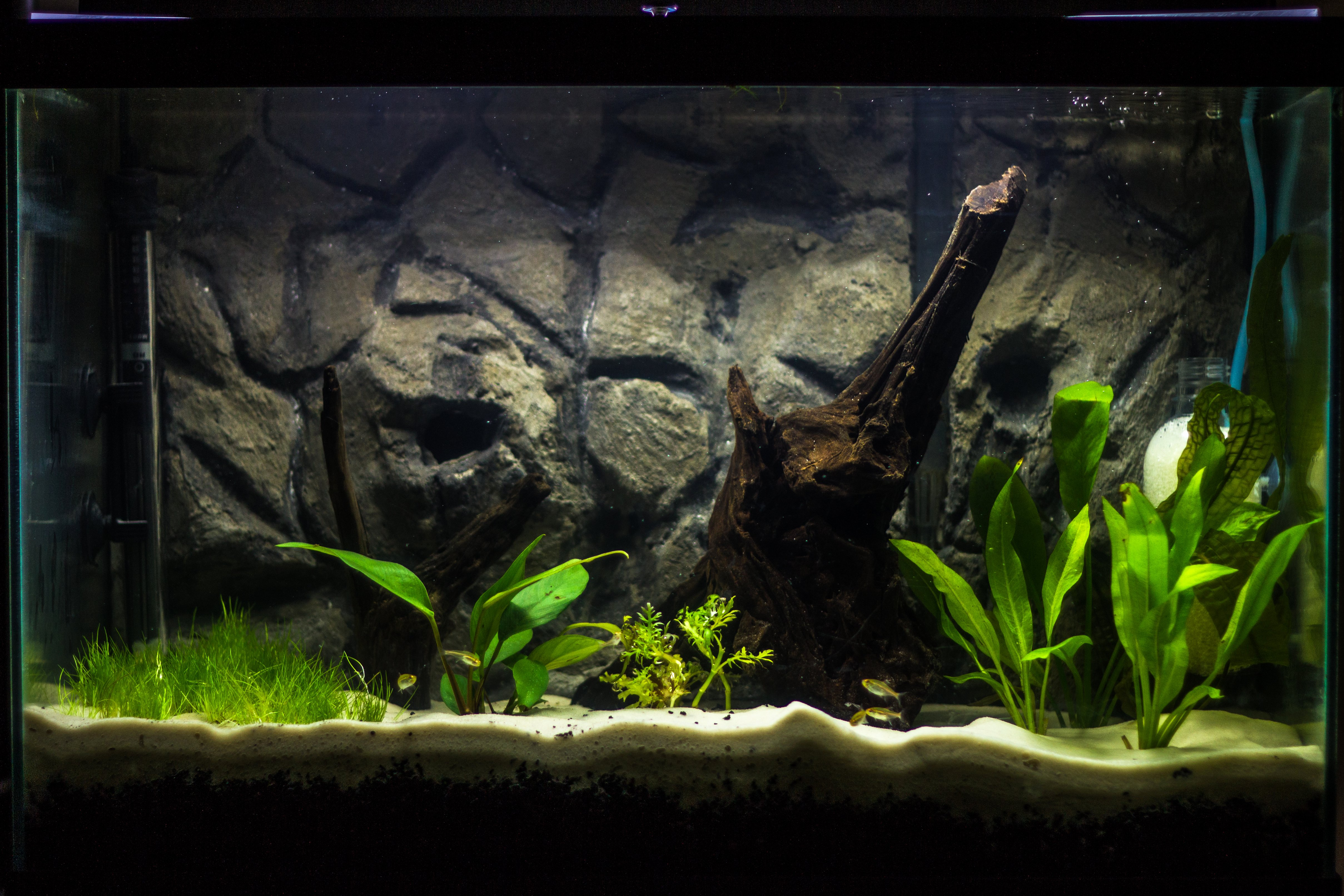 20 Gallon Aquarium Background Lovely Planted Tank