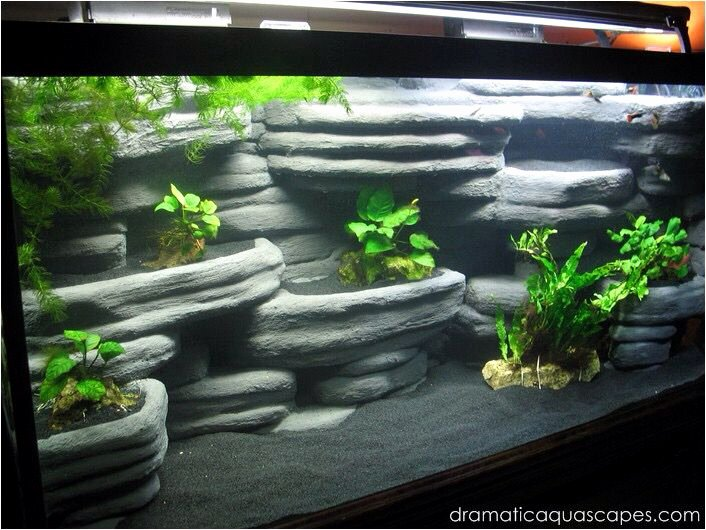 20 Gallon Aquarium Background Unique Cool Fish Tank Fish Pinterest