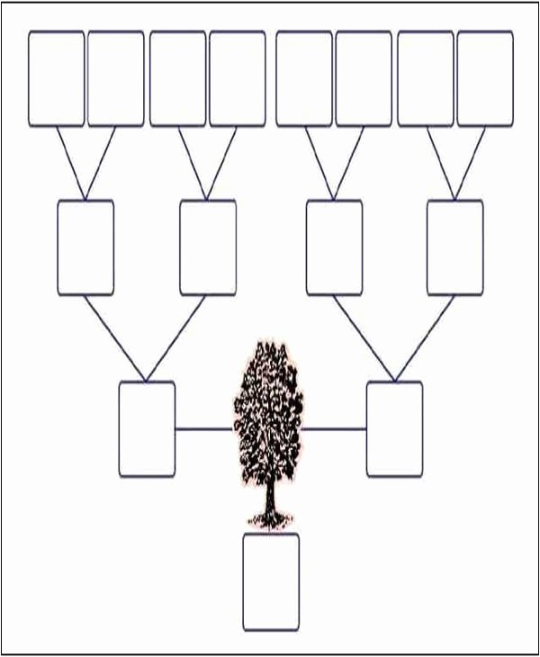 3 Generation Family Tree New 9 Family Tree Template with Siblings Pdf Doc