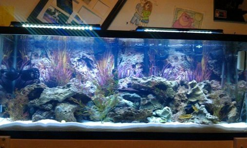 30 Gallon Fish Tank Background Beautiful 10 Best Images About 55 Gallon Fish Tank Remodel On
