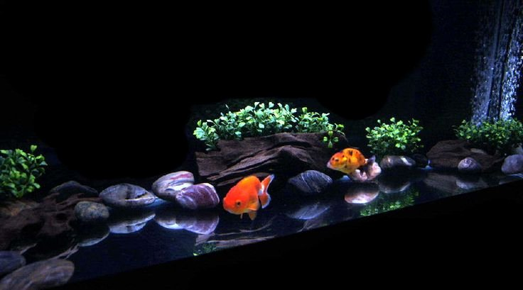 30 Gallon Fish Tank Background Beautiful 30 Gallon Fish Tank Fish Ideas My 30 Gallon Fish Tank