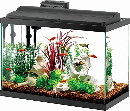 30 Gallon Fish Tank Background Best Of 5 to 9 Gallons Archives Page 5 Of 21 Five Gallon Fish