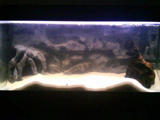 30 Gallon Fish Tank Background Best Of How to Make A 3d Fish Aquarium Background