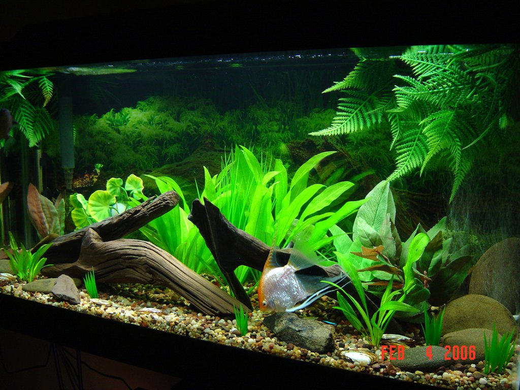 30 Gallon Fish Tank Background Elegant 30 Gallon Planted Tank by isabellany On Deviantart