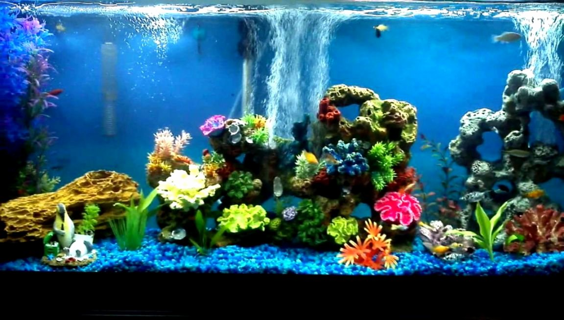 30 Gallon Fish Tank Background Elegant Freshwater Munity Aquarium Fish