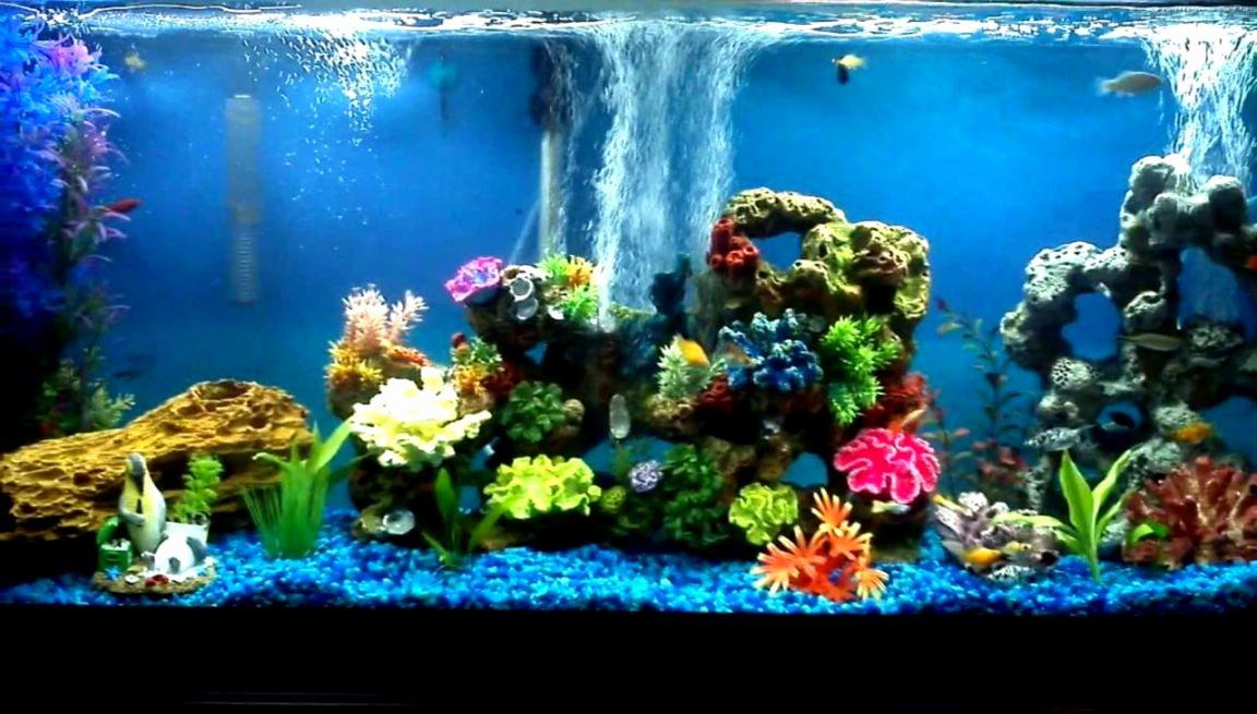 30 Gallon Fish Tank Background Elegant Freshwater Munity Aquarium Fish