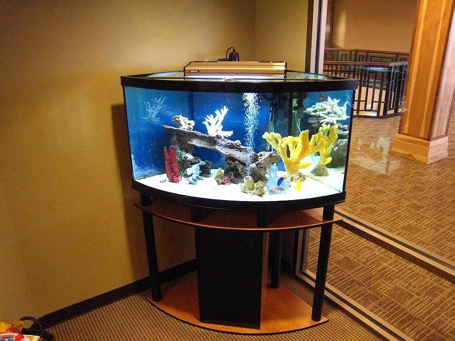 30 Gallon Fish Tank Background Fresh 30 Gallon Long Aquarium Stand Aquarium Ideas