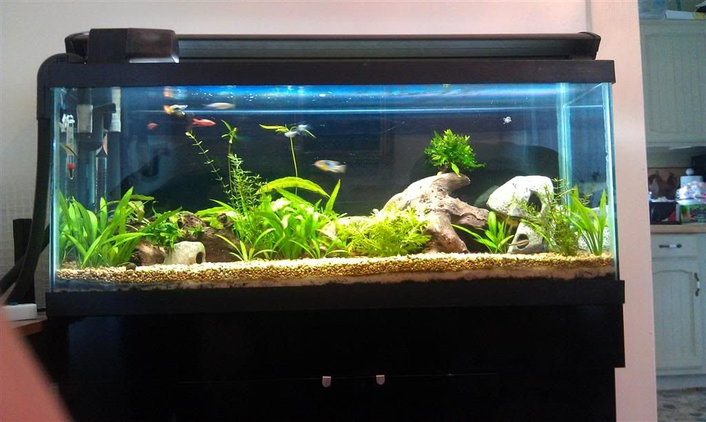 30 Gallon Fish Tank Background Fresh New to Me 30 Gallon Long Page 13 Aquarium forum