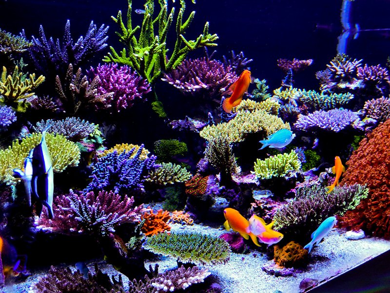 30 Gallon Fish Tank Background Fresh Reefkeeping Magazine May 2014 Tank Of the Month