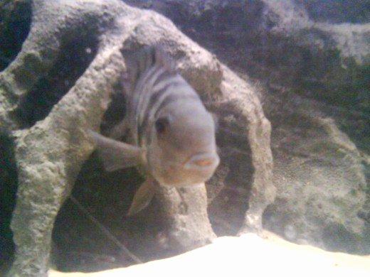30 Gallon Fish Tank Background Inspirational How to Make A 3d Fish Aquarium Background