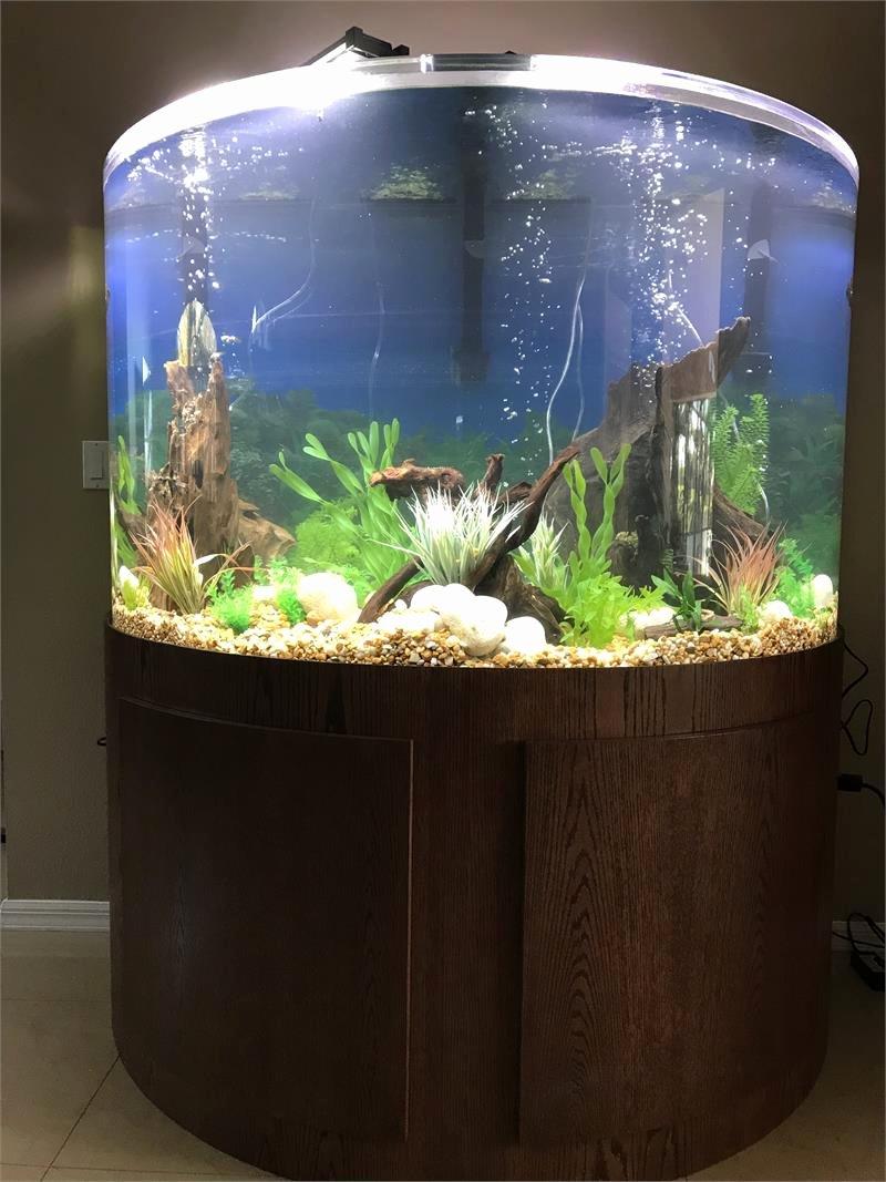 "30 Gallon Fish Tank Background Inspirational Tsunami 70 Gallon 36""lx18""wx30""h Half Cylinder Acrylic"