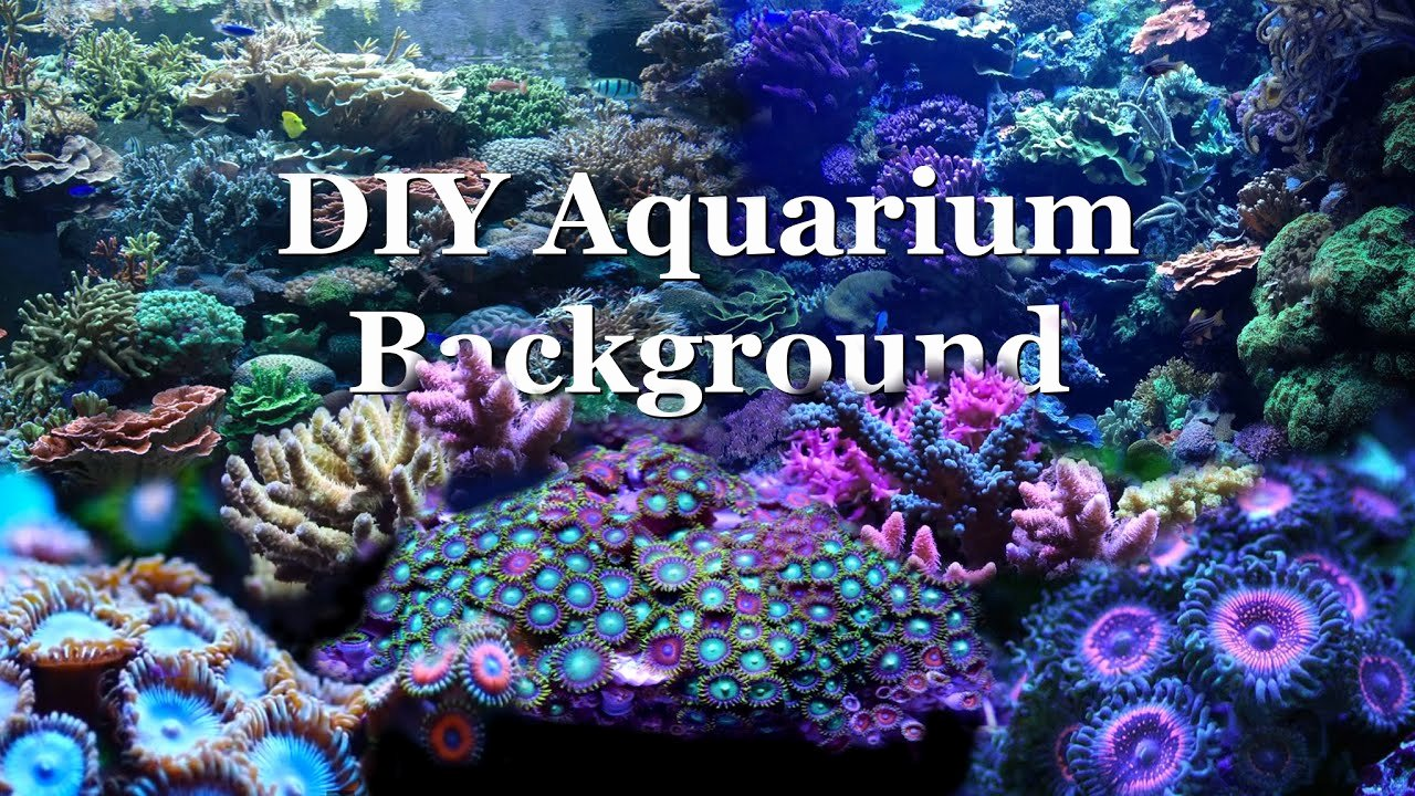 30 Gallon Fish Tank Background Lovely How to Diy Aquarium Background