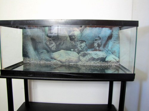 30 Gallon Fish Tank Background New 20 Gallon Long Aquarium Fish Tank and Cover W Stand and
