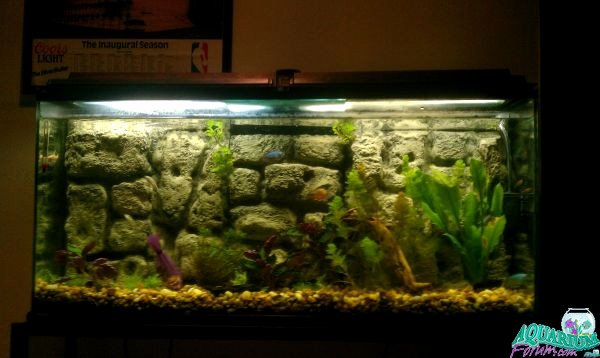 30 Gallon Fish Tank Background New My 30 Gallon Tank Diy Background Aquarium forum