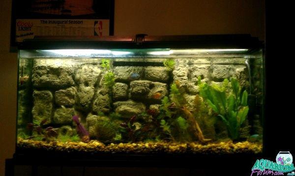 30 Gallon Fish Tank Background New My 30 Gallon Tank Diy Background Aquarium forum