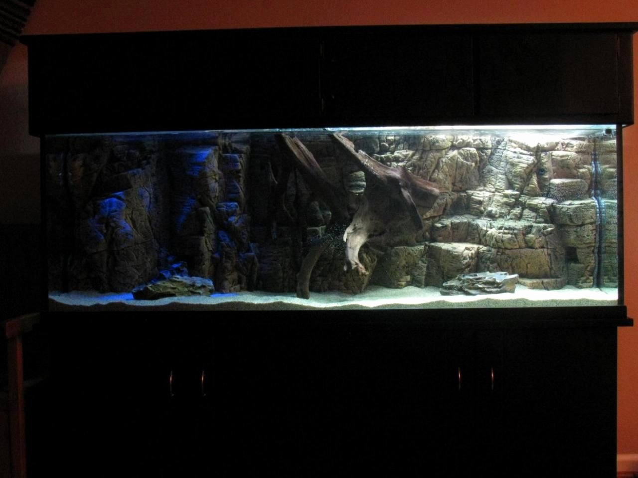 3d Backgrounds Fish Tank Awesome 3d Background Discus Aquarium Fish Tank Ideas