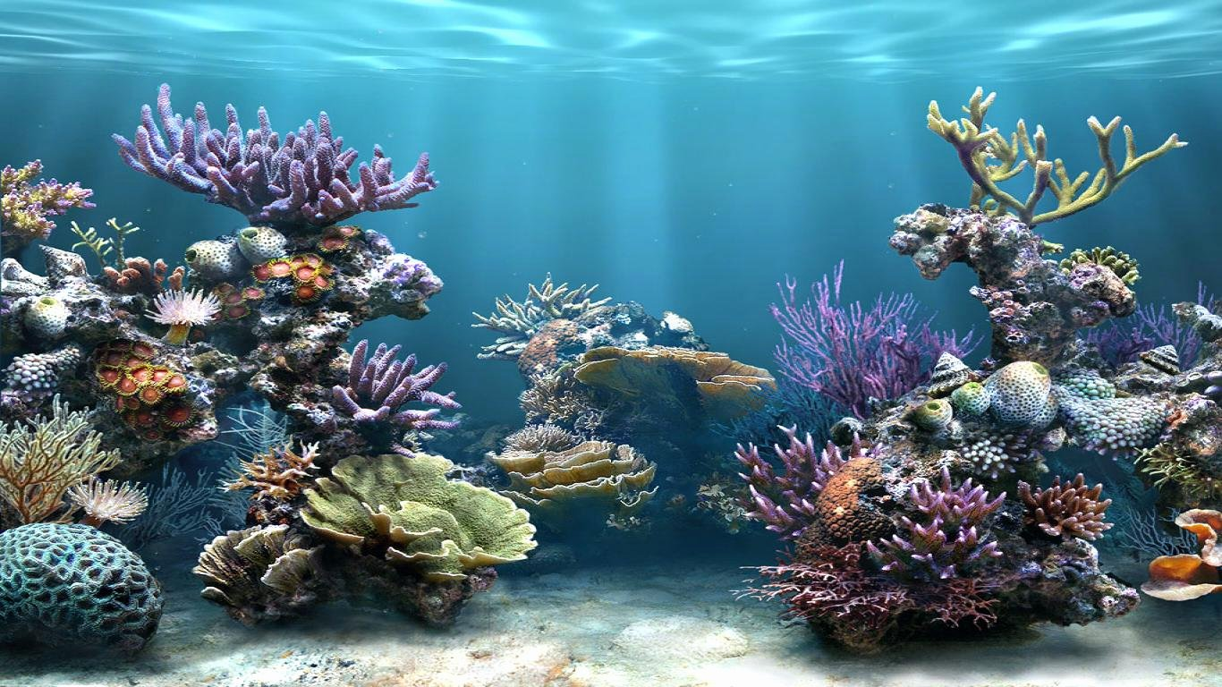 3d Backgrounds Fish Tank Beautiful 3d Hd Wallpaper Collection 50