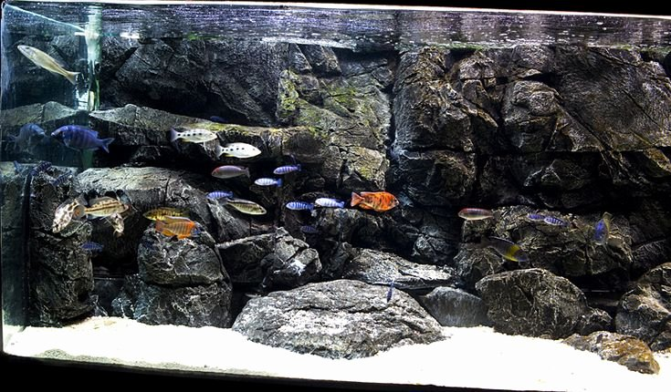 3d Backgrounds Fish Tank Beautiful Home Cichlid Fishtank