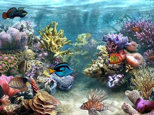 3d Backgrounds Fish Tank Inspirational Fish Tank Moving Desktop Backgrounds