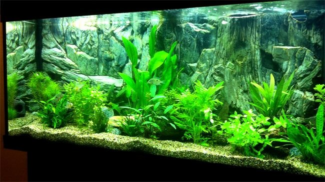 3d Backgrounds Fish Tank New 3d Basic Background Inside Planted Fish Tank