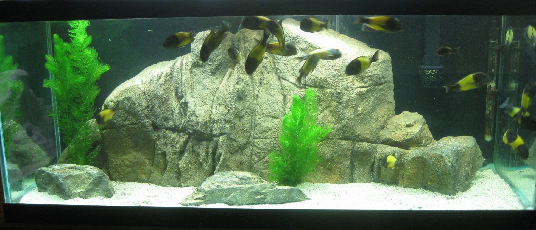 "3d Backgrounds Fish Tank Unique 3 D Aquarium Fish Tank Background Feature Rock 46""x18"""