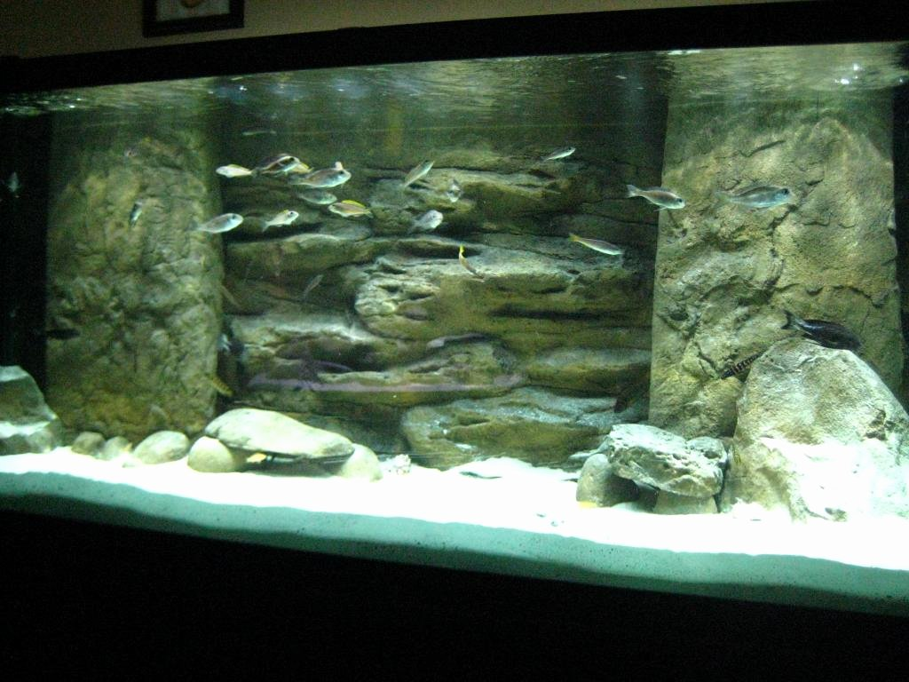 3d Backgrounds Fish Tank Unique Universal Rocks Ledge 3d Background
