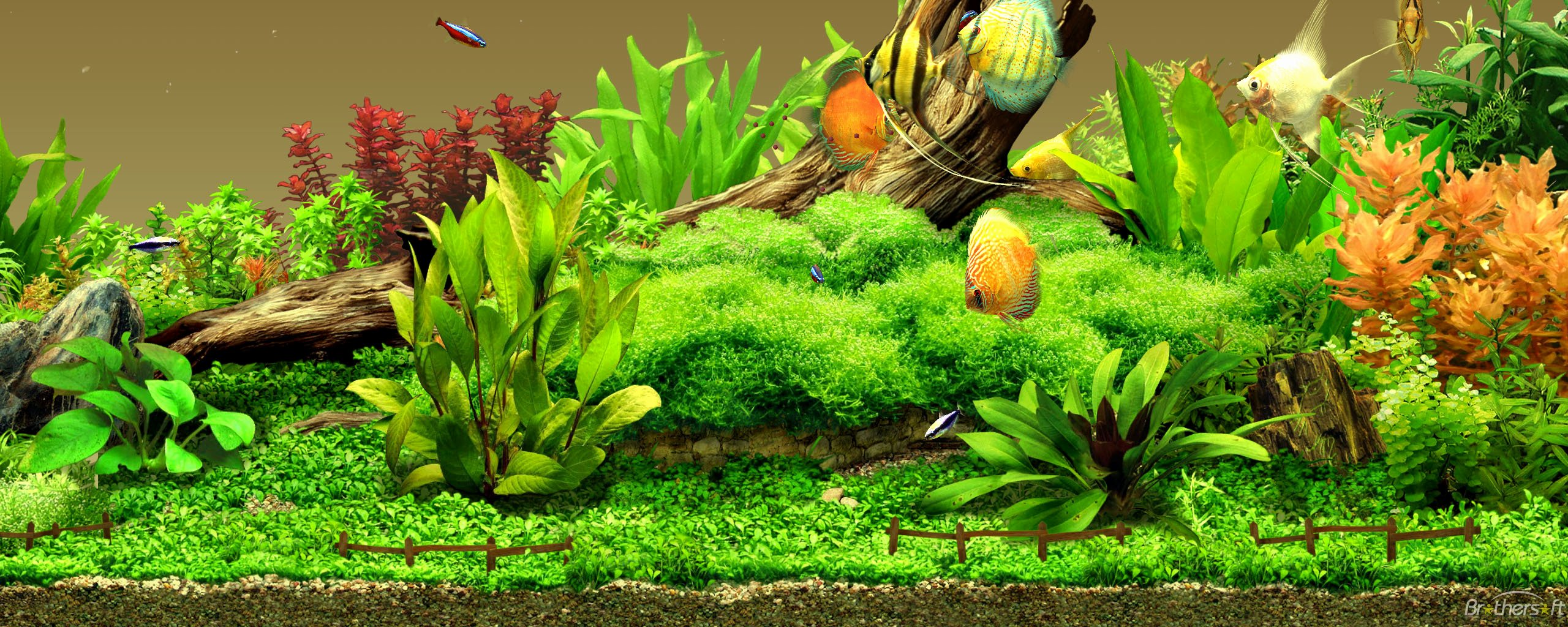 3d Fish Tank Wallpaper Awesome Aquarium High Definition Wallpapers Free Download