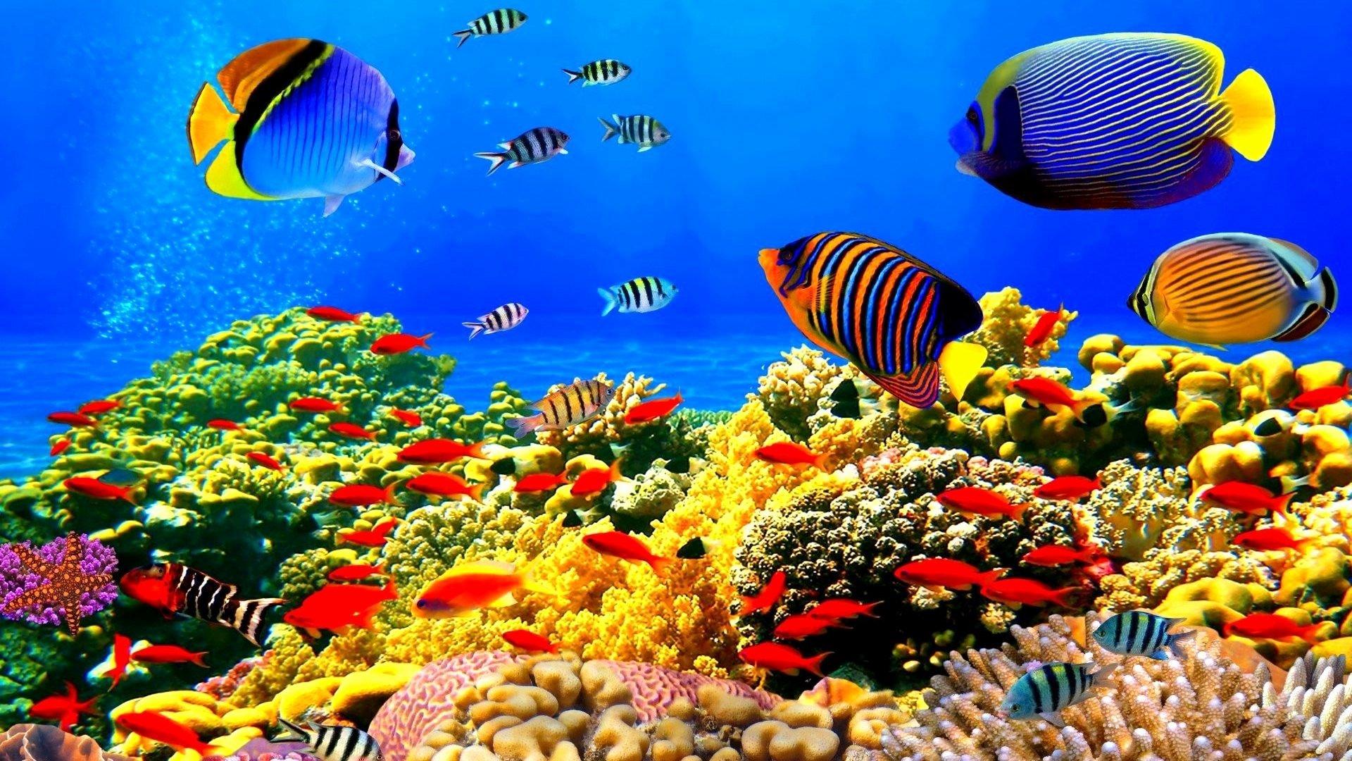 3d Fish Tank Wallpaper Best Of 3d Fish Tank Wallpaper 59 Images