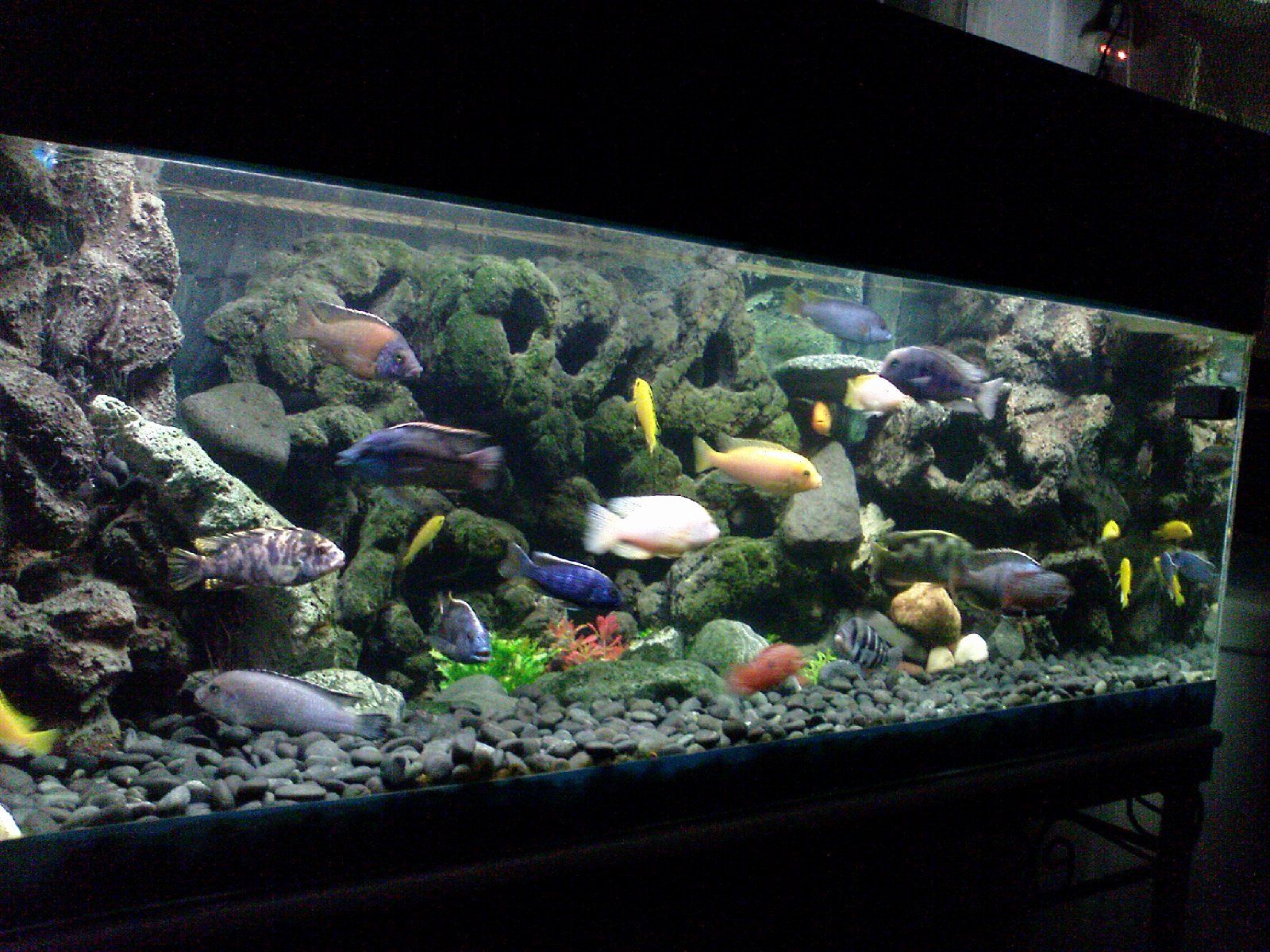 3d Fish Tank Wallpaper Best Of Diy 3d Aquarium Background