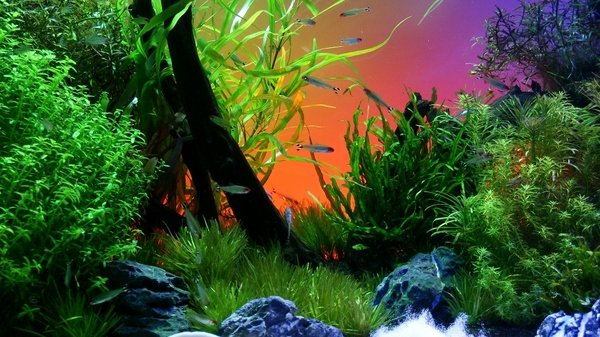 3d Fish Tank Wallpaper Best Of Free 3d Fish Tank Wallpaper Wallpapersafari