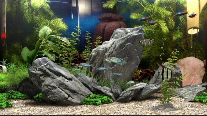 3d Fish Tank Wallpaper Elegant Dream Aquarium 37 Fish Tank Backgrounds Download